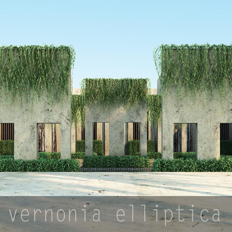 3d model vernonia elliptica