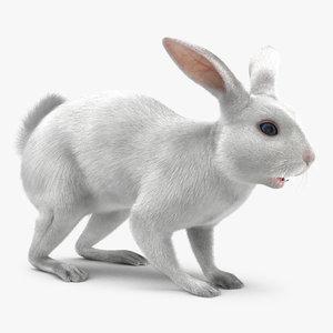 white rabbit max