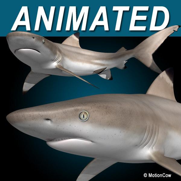 reef shark 3d max