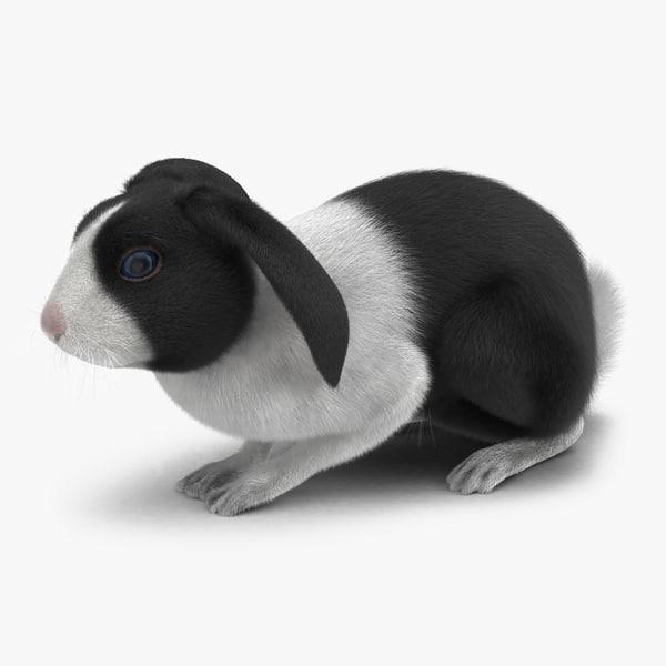 black rabbit pose 2 max
