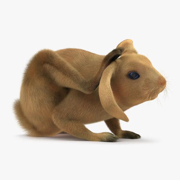3d rabbit pose 4
