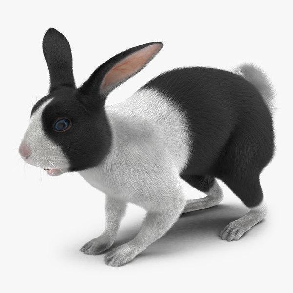 3d model black rabbit