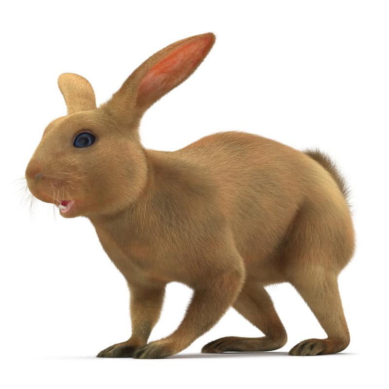 3d rabbit fur hair model