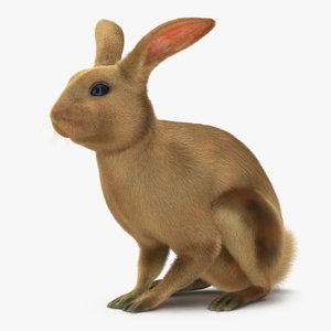 3d rabbit pose 3 model