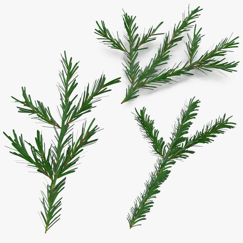 3d pine tree sprigs model