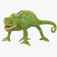 max chameleon pose 4