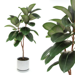 3d ficus elastica decora medium model
