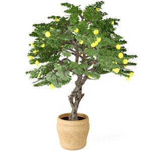 lemon tree 3d max