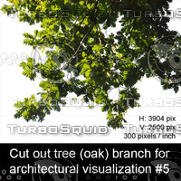 Cut out oak tree branch for architectural visualization #5