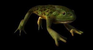 bull frog 3d model
