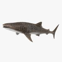 max whale shark