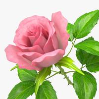 rose_v_5