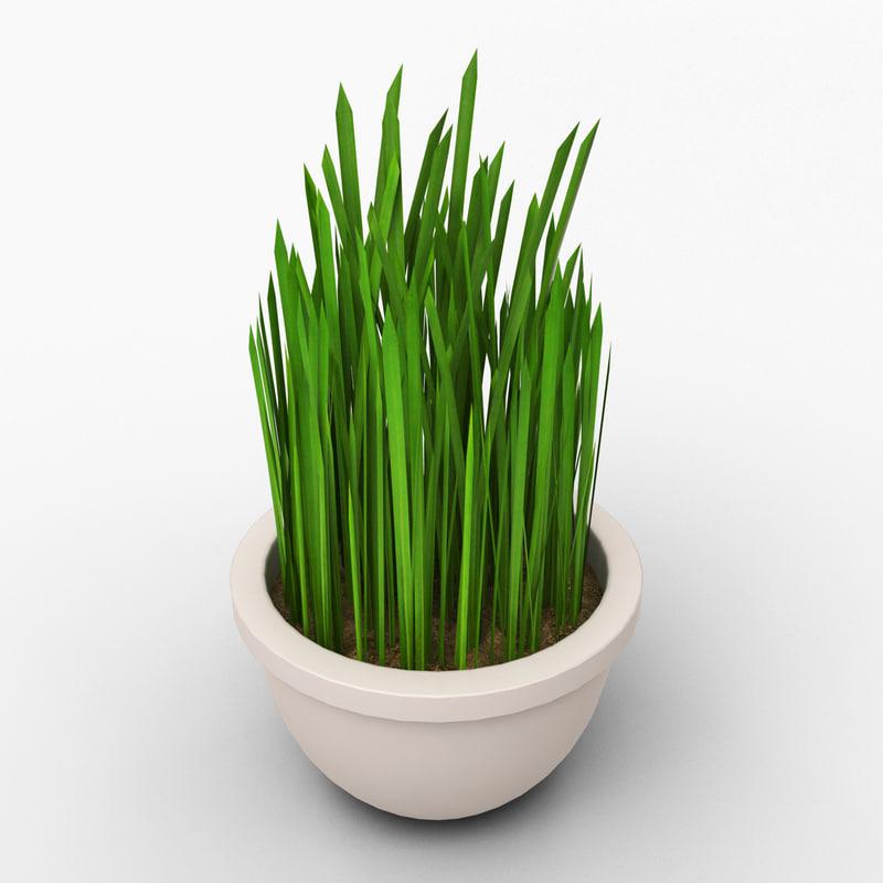 grass pot max