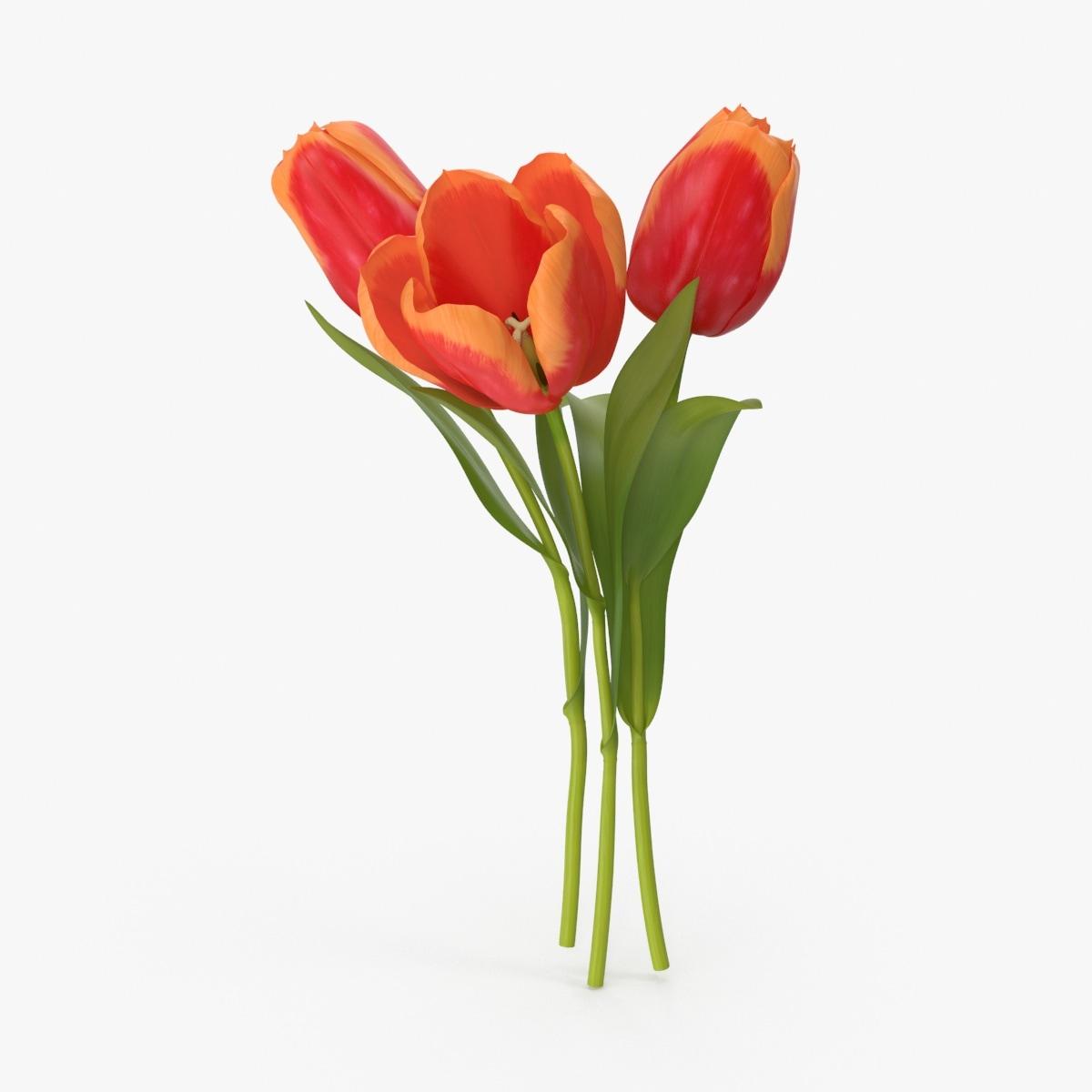 tulips max