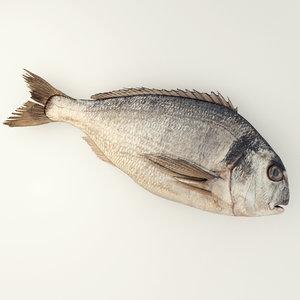 3d raw sea bream fishing
