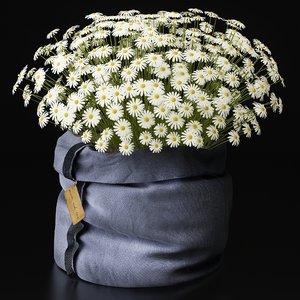 chamomile arrangement 3d model