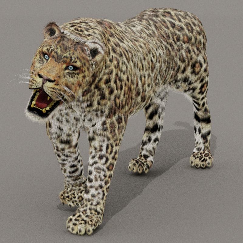 3d zbrush leopard fur animals model