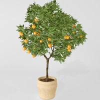 3d model orange tree