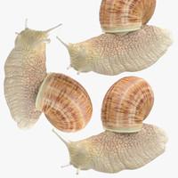 poses snail max