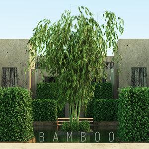 max bamboo tree