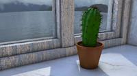 cactus on window