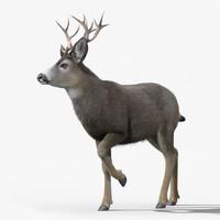 3d mule deer stag fur