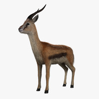 3d model of thomson gazelle - fur