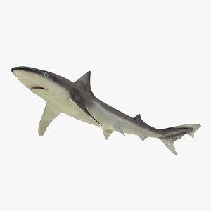 3d model school shark rigged