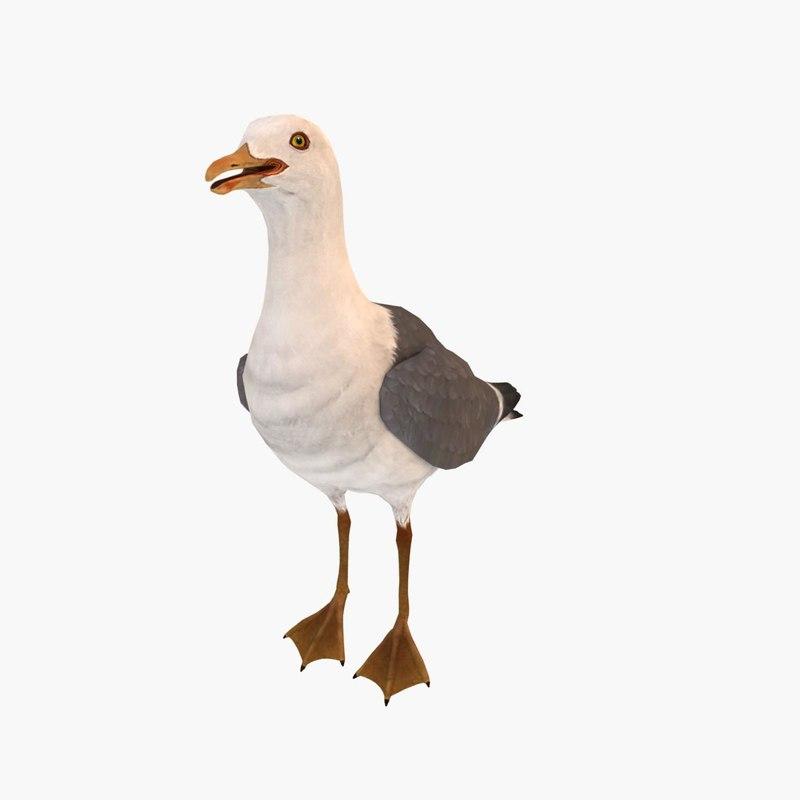 max sea gull