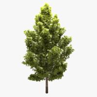 tree 3d obj