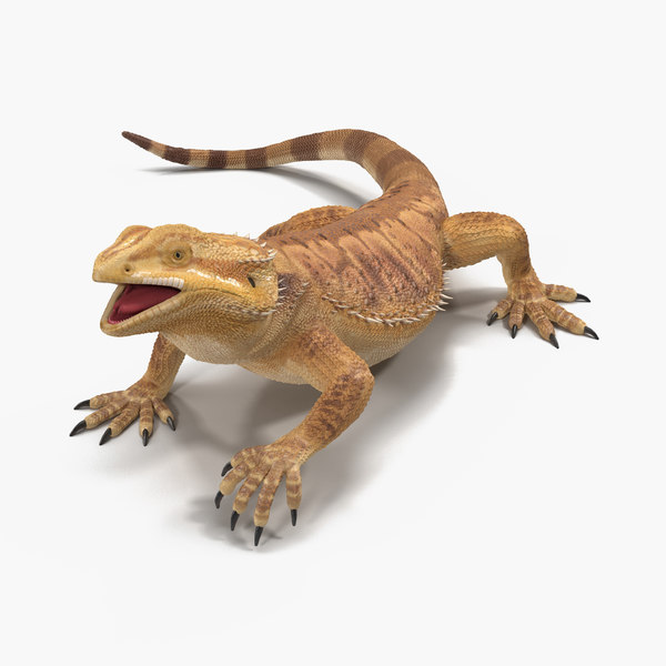 bearded dragon rigged 3d model