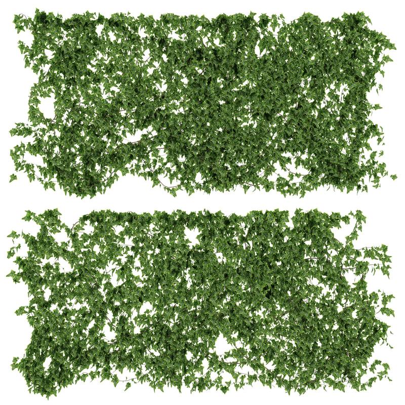max wall vine leaves