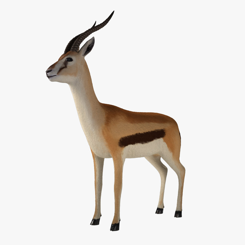 3d thomson gazelle model