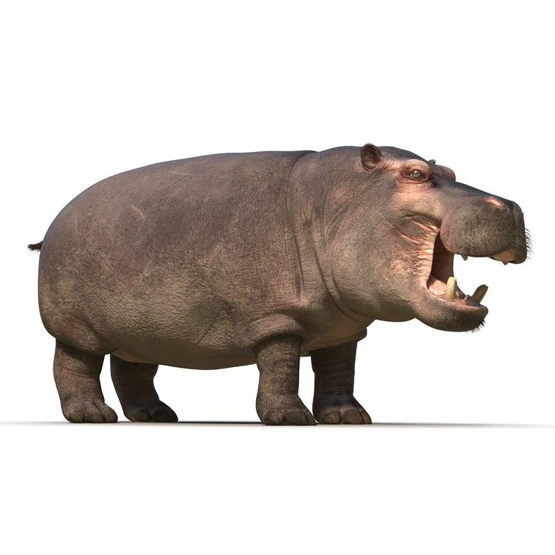 hippopotamus 2 fur max