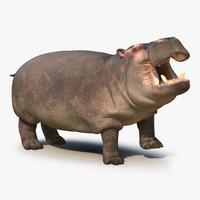 hippopotamus rigged 3d max