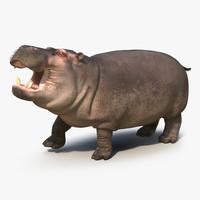 3d max hippopotamus rigged fur