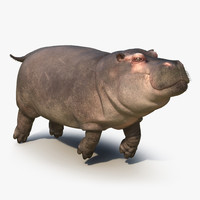 floating hippopotamus fur 3d max