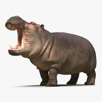 hippopotamus pose 2 fur max