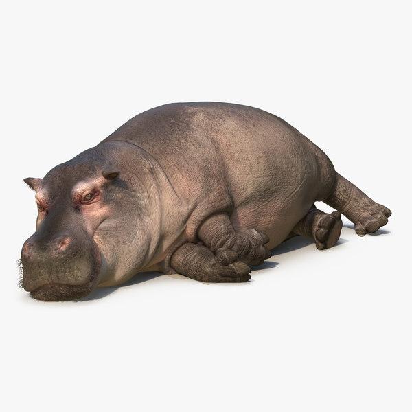 3d lying hippopotamus fur