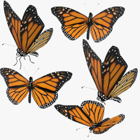 Monarch Butterfly Poses Collection