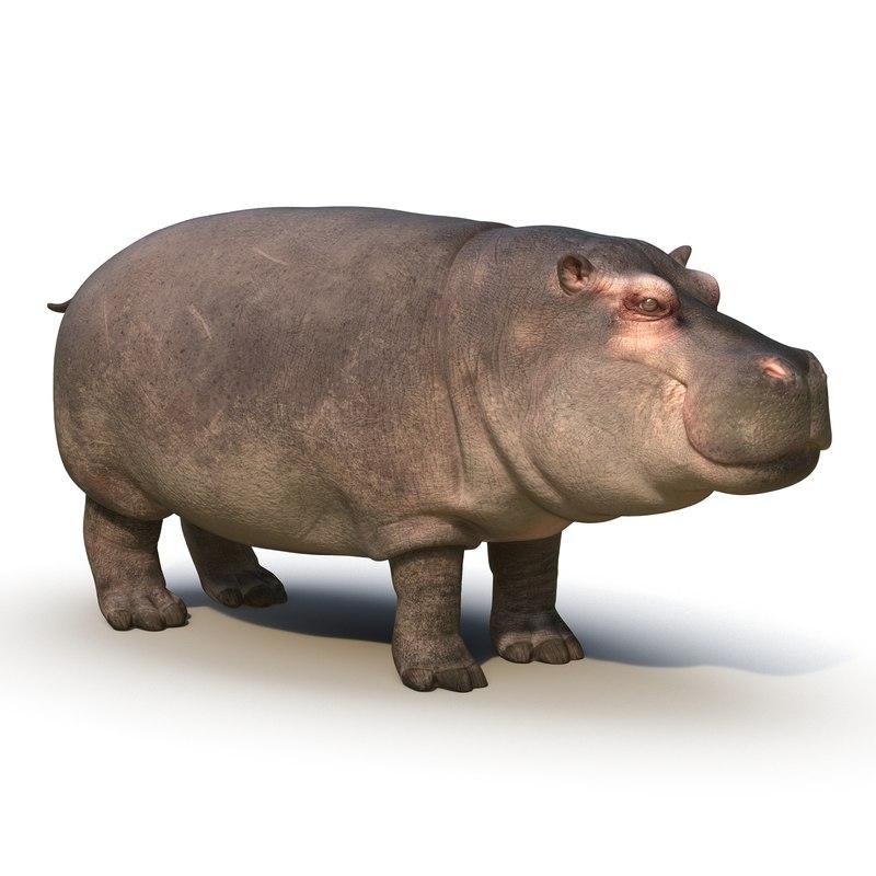 hippopotamus fur max