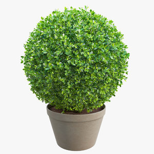 boxwood bush 3d max