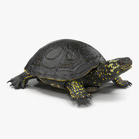 3d model european pond turtle rigged