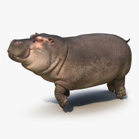 3d model floating hippopotamus