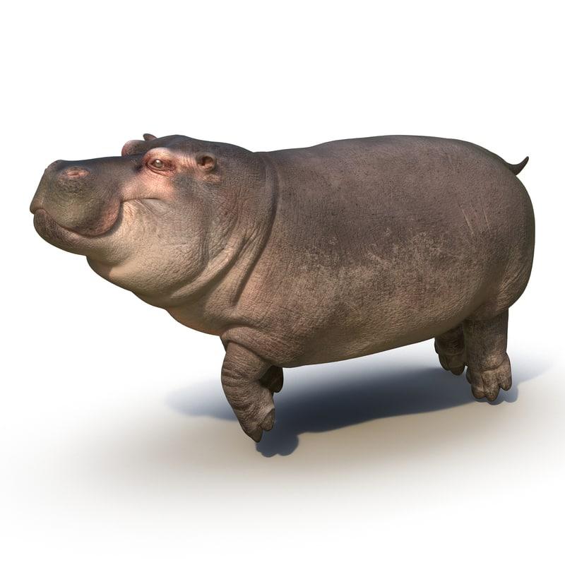 3d model floating hippopotamus