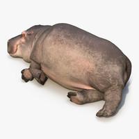 3d model lying hippopotamus