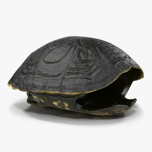 turtle shell 2 c4d