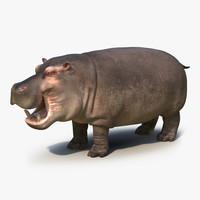 3d hippopotamus 2 model