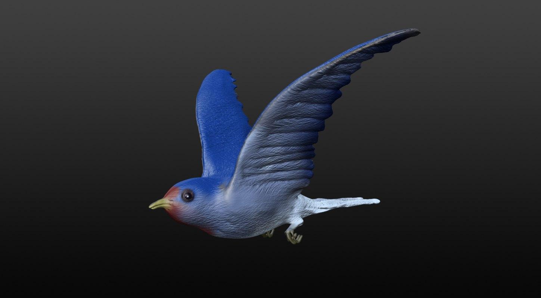 3d swallow model