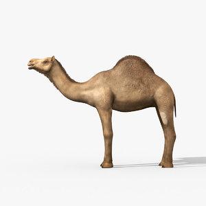 max camel